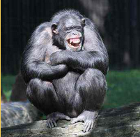 Submissive chimpanzee